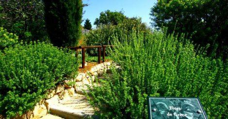 Jardin botanique gazon du sud magazine du jardin for Jardin botanique nice